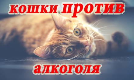 Возможное ужесточение правил продажи алкоголя в России