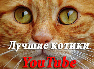 Лучшие котики YouTube