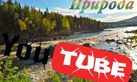 Интересные каналы YouTube: природа, тайга, выживание в лесу