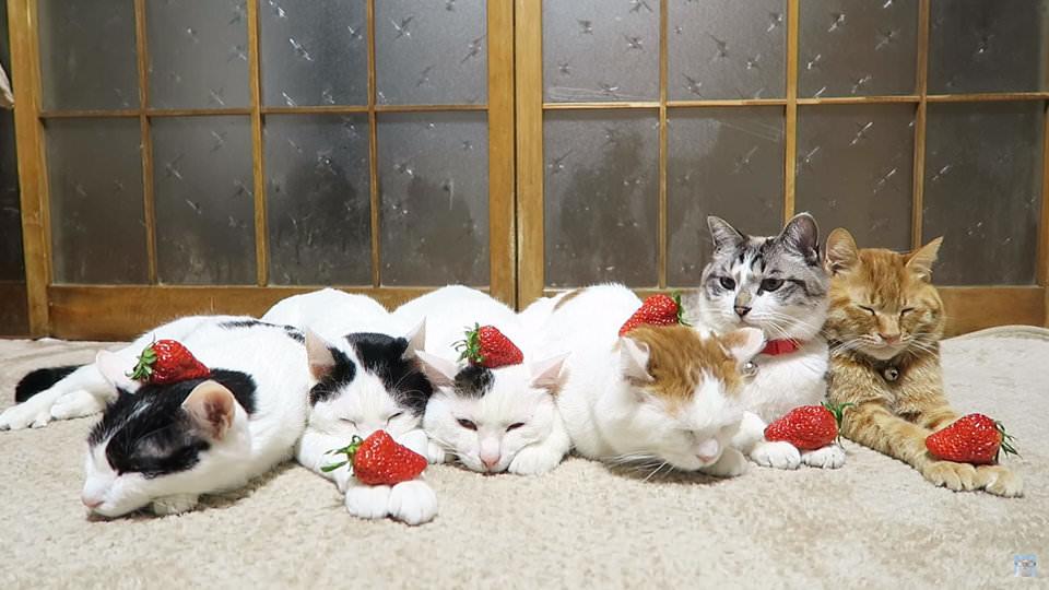 кошки и клубника