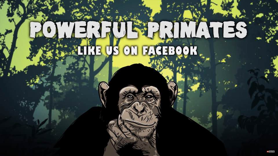 Powerful Primates