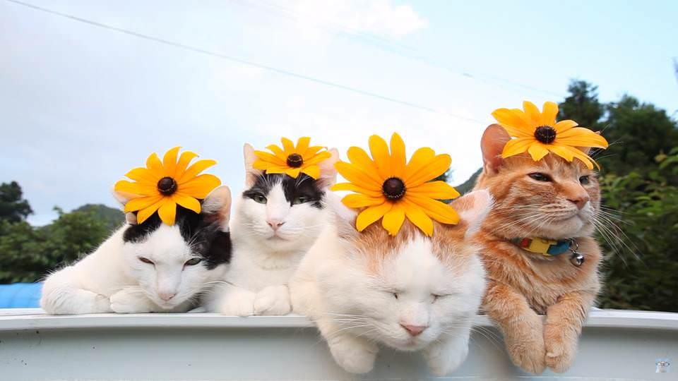 かご 猫 Blog