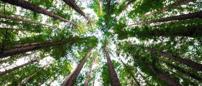Медитация дерево