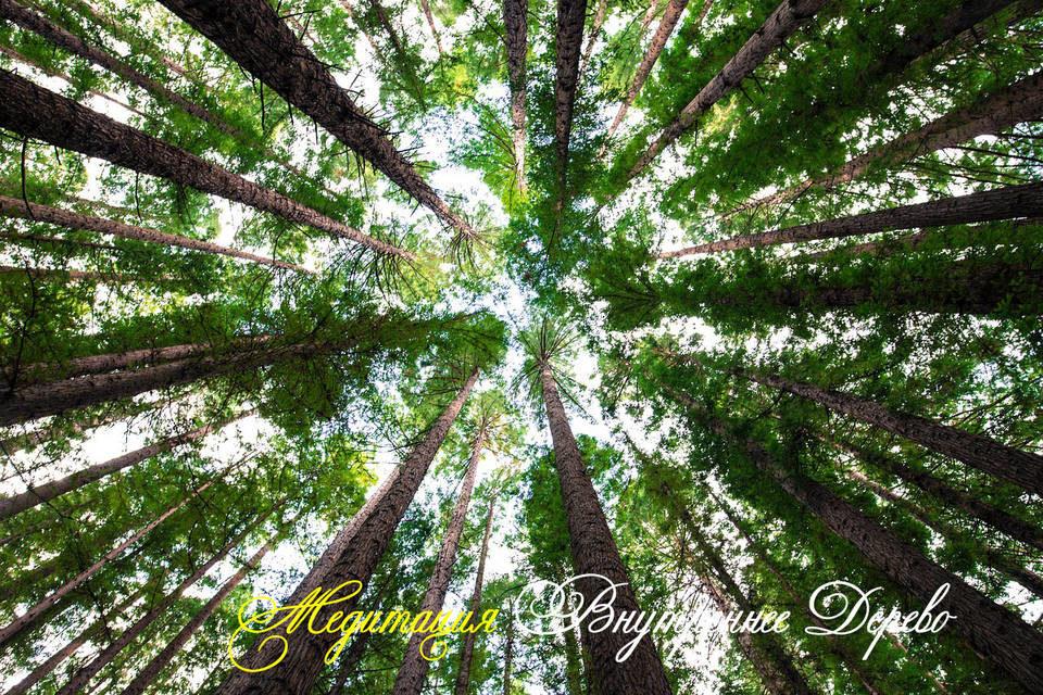 Медитация «Внутреннее дерево»