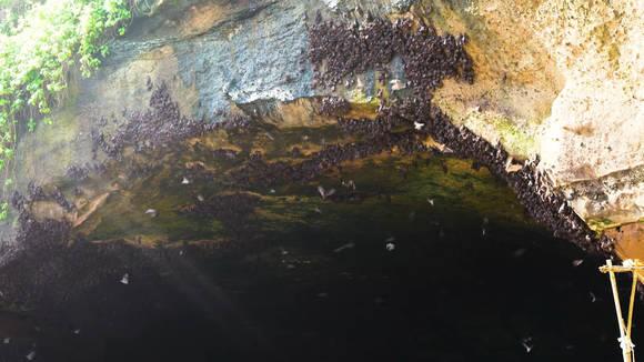 пещера летучих мышей на Бали