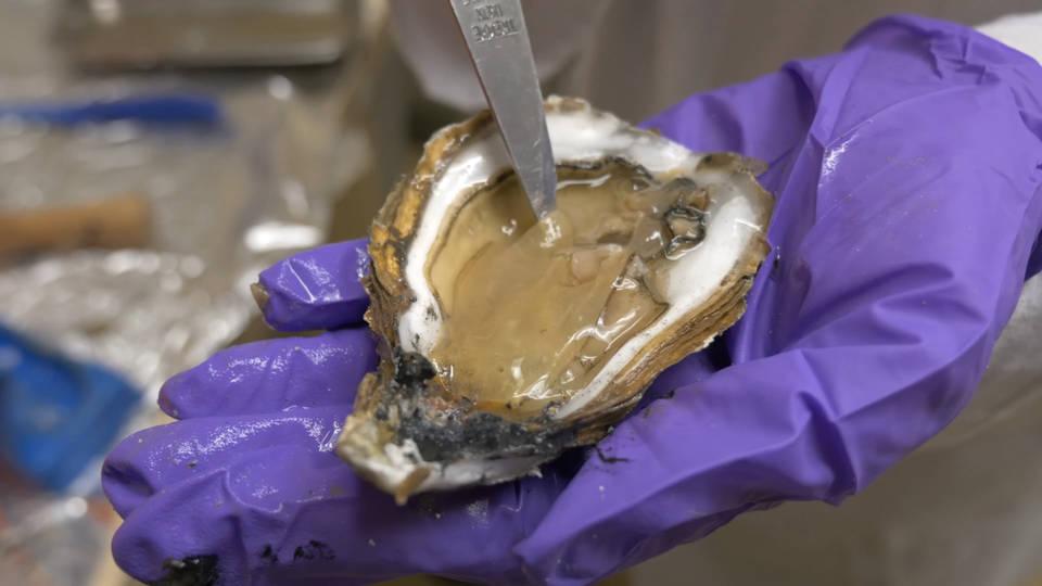 микропластик в морской фауне