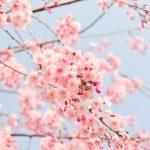 Япония. Чайные истории