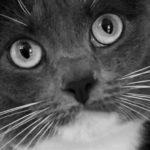 Айлурофобия – страх перед кошками