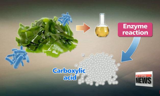 Ученые заменяют пластик водорослями