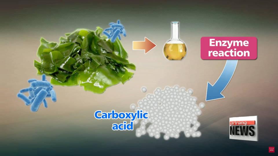 пластик водоросли