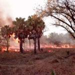 Шварценеггер был атакован обезьяной в Южной Африке